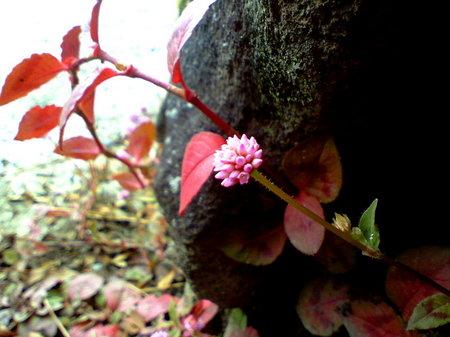 空を入れて撮りたかったのですが、どんなにアクロバットしても無理でした(笑。葉の鮮やかな紅が、庭に映えます。