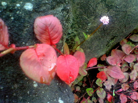 朝まで雨が降っていたので、まだ葉が濡れています。…なんかボケてますが、これはこれで、ぼんやり感がヨシ(笑