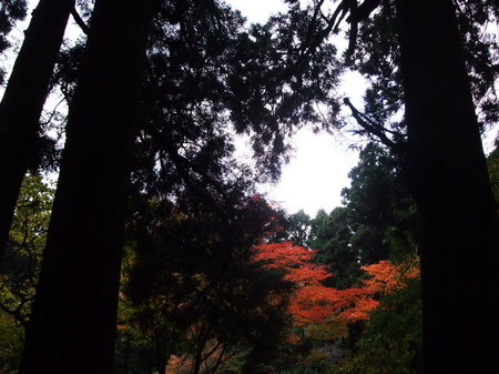 杉並木から望む紅葉。