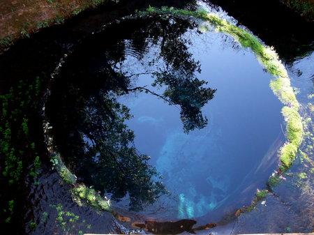 柿田川湧水。