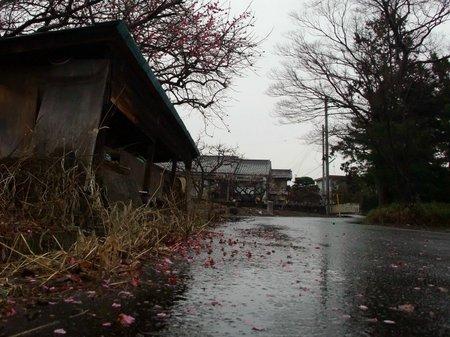 雨降る小道。