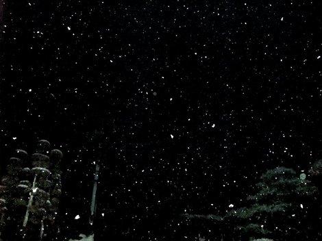 家の庭から雪空眺めて。